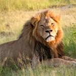 Cecil, Wikipedia.org