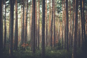 trees Pixabay